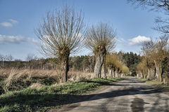 A dirt road with willows Stock Images