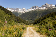 Dirt Road Winding Down Mountainside. A dirt road winding through flowers and forest towards some lightly snowcapped rocky mountains Stock Images