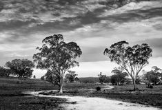 Dirt road winds around a tree under a cloudy sky in mid west New South Wales, Australia, in black and white. Farm Stock Images