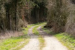 Dirt road disappear in forest. Dirt road winds and disappears in the woods. Springtime royalty free stock photo