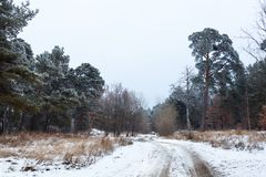 Dirt road in the winter forest Royalty Free Stock Image