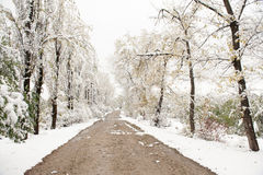 Dirt road in a winter park Royalty Free Stock Photos