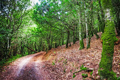 Dirt road in the wood Stock Photography