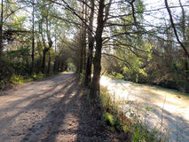 Dirt road in the woods Royalty Free Stock Images