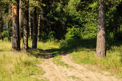 Dirt road in the woods Royalty Free Stock Image