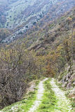 Dirt road in the woods, Monte Cucco NP, Appennines, Umbria, Ital Royalty Free Stock Photography