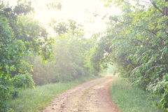 Dirt road in the woods Royalty Free Stock Photo