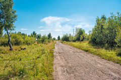 Dirt road in the woods Royalty Free Stock Photos