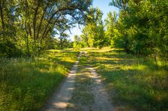Dirt road in the woods Stock Photo