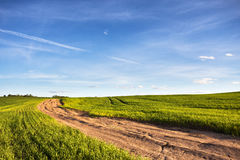 Dirt rural road in a green wheat field Royalty Free Stock Photo