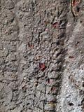 Dirt texture Stock Photos