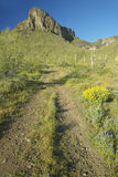 Dirt tire tracks leading to Picacho Peak State Park north of Tucson, AZ in spring time Royalty Free Stock Image