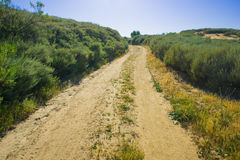 Dirt Track in California Wilderness Stock Photography