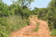 Dirt track. Within entabeni game reserve welgevonden waterberg limpopo province south africa Stock Images