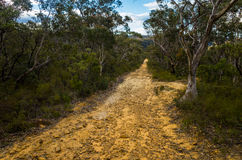 Dirt Track Leading Through a Forest of Eucalyptus trees Royalty Free Stock Photo