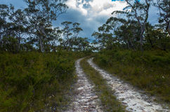 Dirt Track Leading Through a Forest of Eucalyptus trees Stock Photography