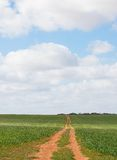 Dirt Track Through Wheat Crop Meets Blue Sky. Stock Images