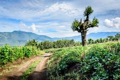 Dirt track winds through farmland in Guatemalan highlands. Central America Stock Image