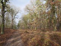 Dirt track through winter woodland. Dirt track through winter or late autumn woodland with bare branched deciduous trees with lichen and fallen dead leaves on Royalty Free Stock Image