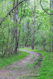 Dirt Trail Curving Through Spring Trees Stock Images