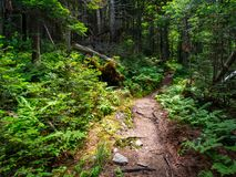 Dirt Trail Through Dense Forest. A dirt trail through a dense forest in the Green Mountains of Vermont Royalty Free Stock Photos