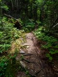 Dirt Trail Through Dense Forest. A dirt trail through a dense forest in the Green Mountains of Vermont Royalty Free Stock Image