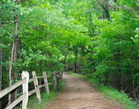 Dirt trail into lush green forest Royalty Free Stock Photos