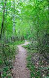 Dirt Trail Through Green Forest Royalty Free Stock Images