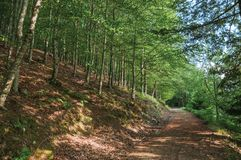 Dirt trail passing through green leafy beech forest. In a sunny day at the highlands of Serra da Estrela. The highest mountain range in continental Portugal stock image