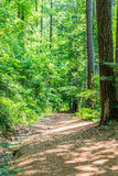 Dirt Trail Through Spring Forest Royalty Free Stock Photography
