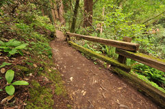 Dirt Trail Through The Woods With Bushes Royalty Free Stock Image