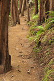 Dirt Trail Through The Woods With Bushes Stock Photography