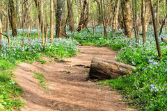 Virginia Dirt Trail Through Wildflowers Royalty Free Stock Images