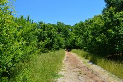 A road less travelled. A dirt walking trailing going through green trees in the summer with a blue sky in the background Royalty Free Stock Photography