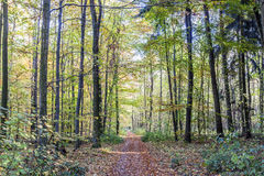 Dirt way in the mixed oak forest Stock Photo