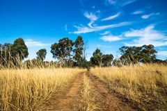 Dirtroad through the dry bush with high yellow grass in the Grampians, Victoria, Australia. Dirtroad through the dry bush with high yellow grass in the Grampians Royalty Free Stock Photo
