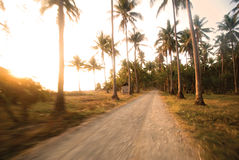 Dirtroad tropicale Fotografie Stock Libere da Diritti