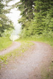 Dirtroad in woods Stock Photo
