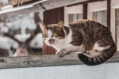 A dirty adult young tabby cat with yellow eyes and pink velvet wet nose is on an old gray wooden fence and expressively looks in. A dirty adult young tabby cat royalty free stock photos