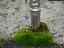 Dirty aluminium tube  wrapped in moss, grey damaged concrete. Plants that are going through royalty free stock photos