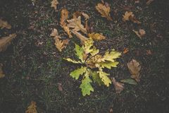 Dirty autumn leaves Royalty Free Stock Images
