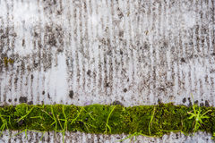 Dirty Background with green detail Royalty Free Stock Photo