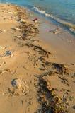 Dirty beach Stock Photography