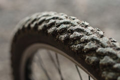 Dirty bicycle tire Stock Photography