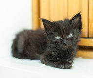 Dirty black kitten on doorstep Royalty Free Stock Image