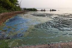 Dirty blue and green toxic algae reservoir. Royalty Free Stock Image