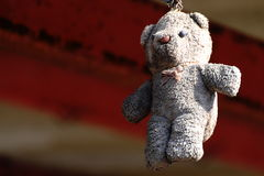 Dirty brown bear was hanging weathered. Royalty Free Stock Images