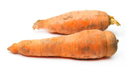 Dirty carrots Royalty Free Stock Photography