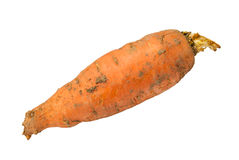 Dirty carrots Royalty Free Stock Photos
