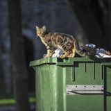 Dirty cat on the container. Dirty cat on the garbage container Royalty Free Stock Photography